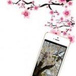今年も開催!寿司食べ放題「きづなすし」で最大20%OFFの桜割りが3/23からスタート!